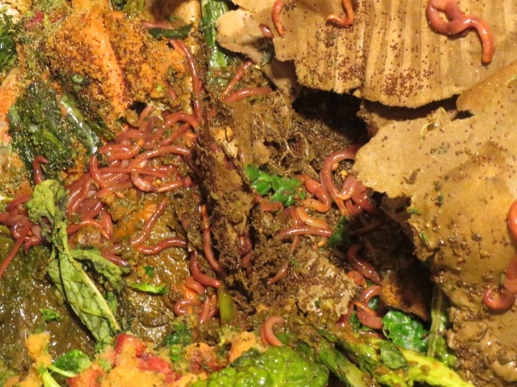 worm inn mega worms